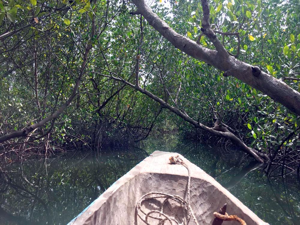 Senegal manglars Image